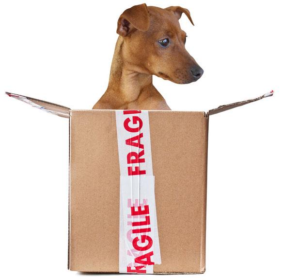 Fragile Freight | Fragile Cargo | Edmonton AB | Fast Lane Transport